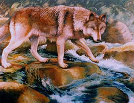 Oregon Wolf.jpg