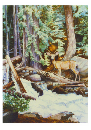 Deer at Holden.jpg