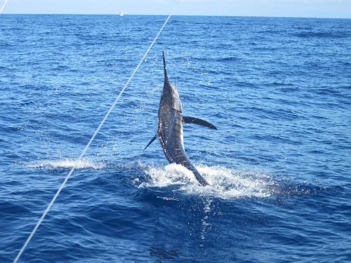 Fraser Island blue marlin/GT