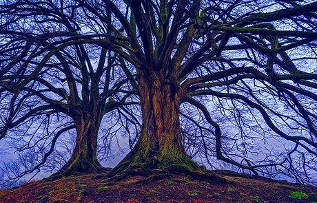 arbre_edited_edited.jpg