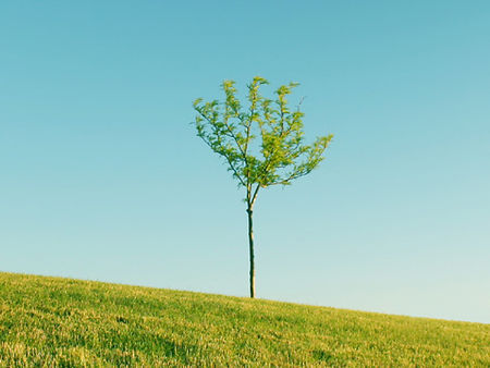 arbre maigre.jpg