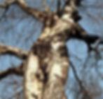 femme arbre2.jpg