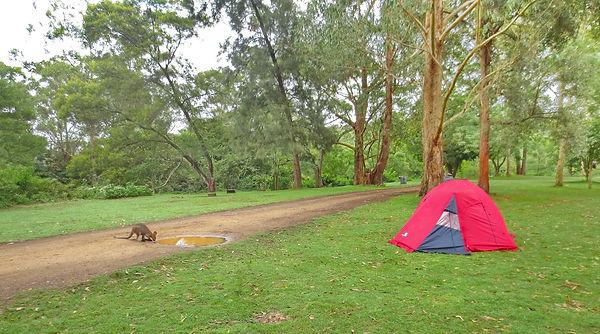Pod plahto - kampiranje v Avstraliji
