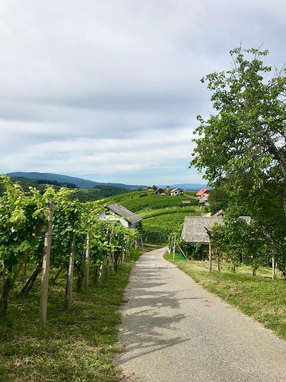 Vinska cesta Gorjanci