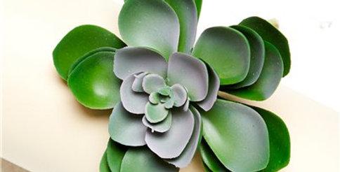 Green Succulent Decoration - 11cm (each)