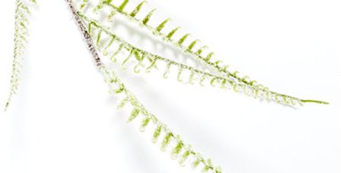 Green Snowy Plastic Fern Leaf - 93cm (each)