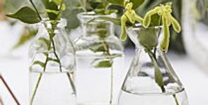 Assorted Glass Mini Vase Set