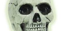 Glow In The Dark Skull - 20cm (each)