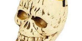 Halloween Skull Bucket  17x15cm