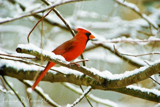 Crimson Cardinal
