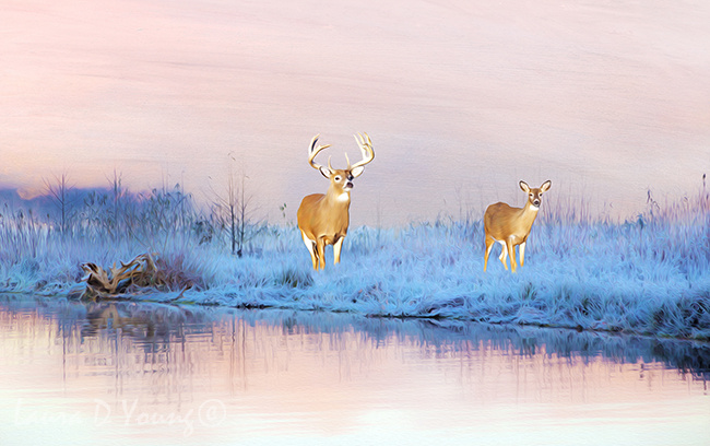 Deer in Winter