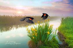 Blackbirds and Irises