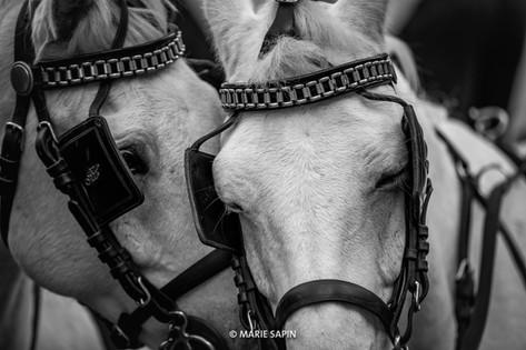© Marie Sapin