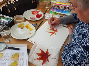 Student pinting an Acer leaf