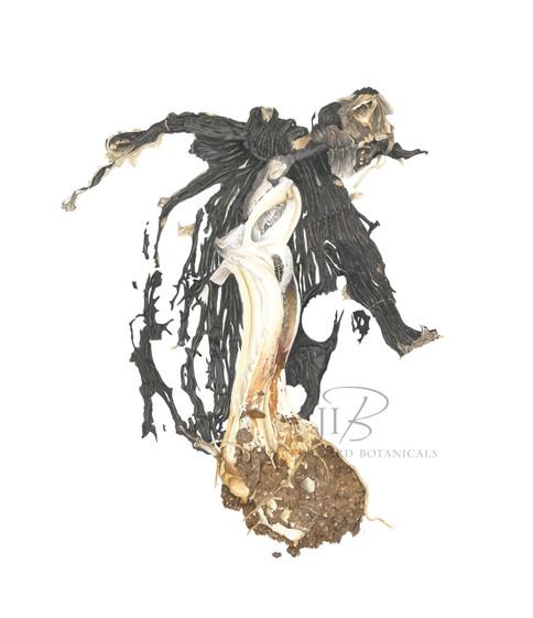 Ink cap fungi 'exploded'