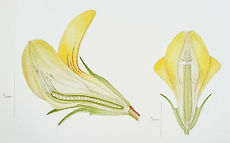 Botany workshop online