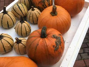 Kein Herbstmarkt