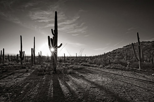 """Sentinels Of The Desert - 11"""" x 14"""" Matted Print"""