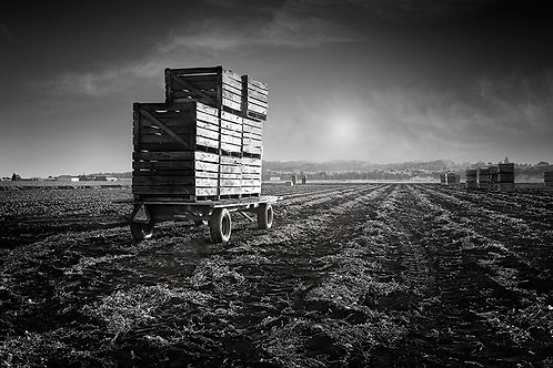 """After The Harvest - 11"""" x 14"""" Matted Print"""