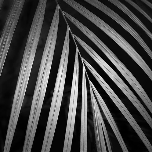 "Glistening Palm Leaf - 11"" x 11""Matted Print"