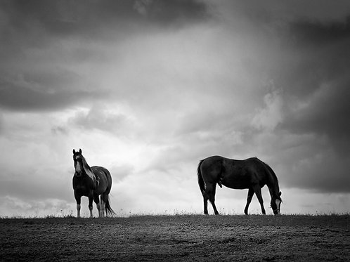 """Horses Of King - 11"""" x 14"""" Matted Print"""