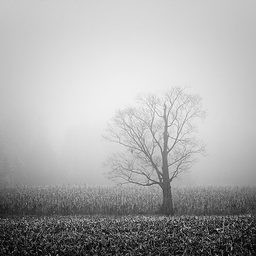 "Lost in the Fog - 11"" x 11""Matted Print"
