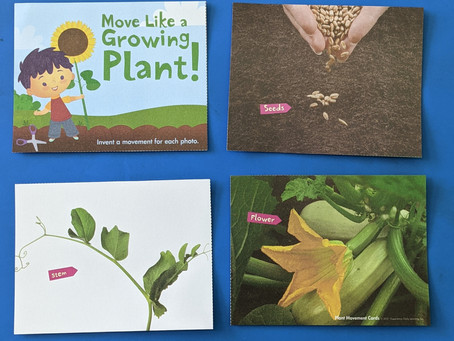 Seed, Stem, Flower - A Movement Activity