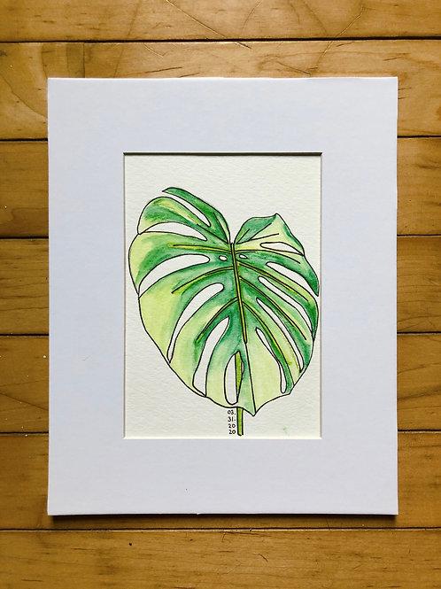 Monstera Leaf Watercolor Drawing