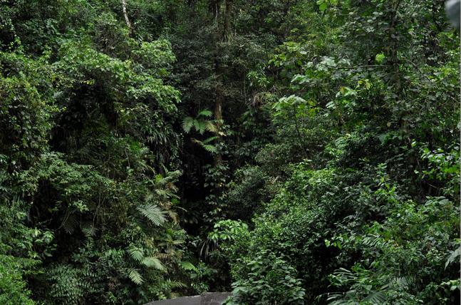 Julie Escoffier, Sin titulo, Chiapas, 2015