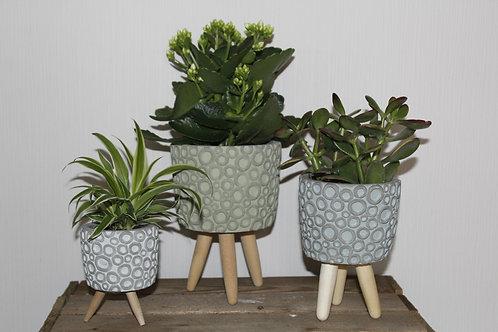 Set van drie planten met potjes