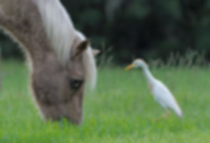 Horse with birds.jpg