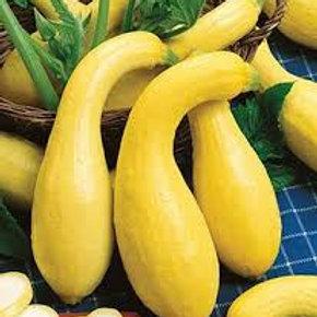 Yellow Squash Crookneck
