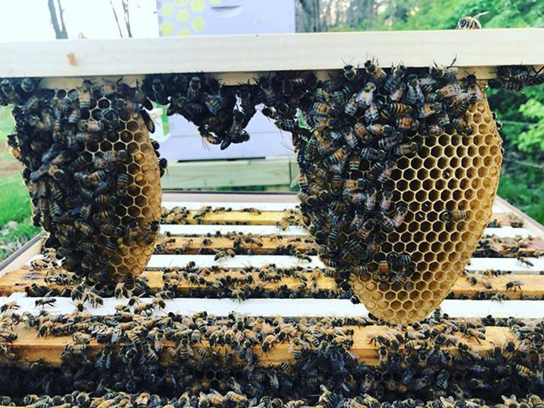 Bees are building up fast! Just installe