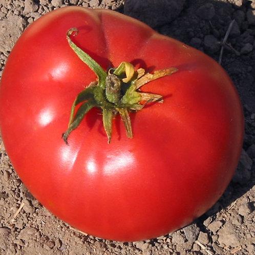 Heirloom Tomato Brandywine