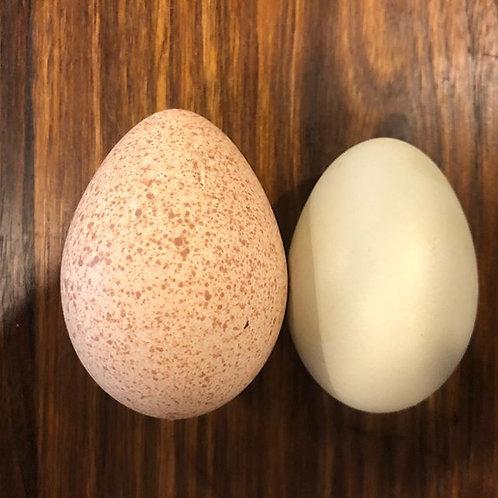 Dozen Duck and Turkey eggs