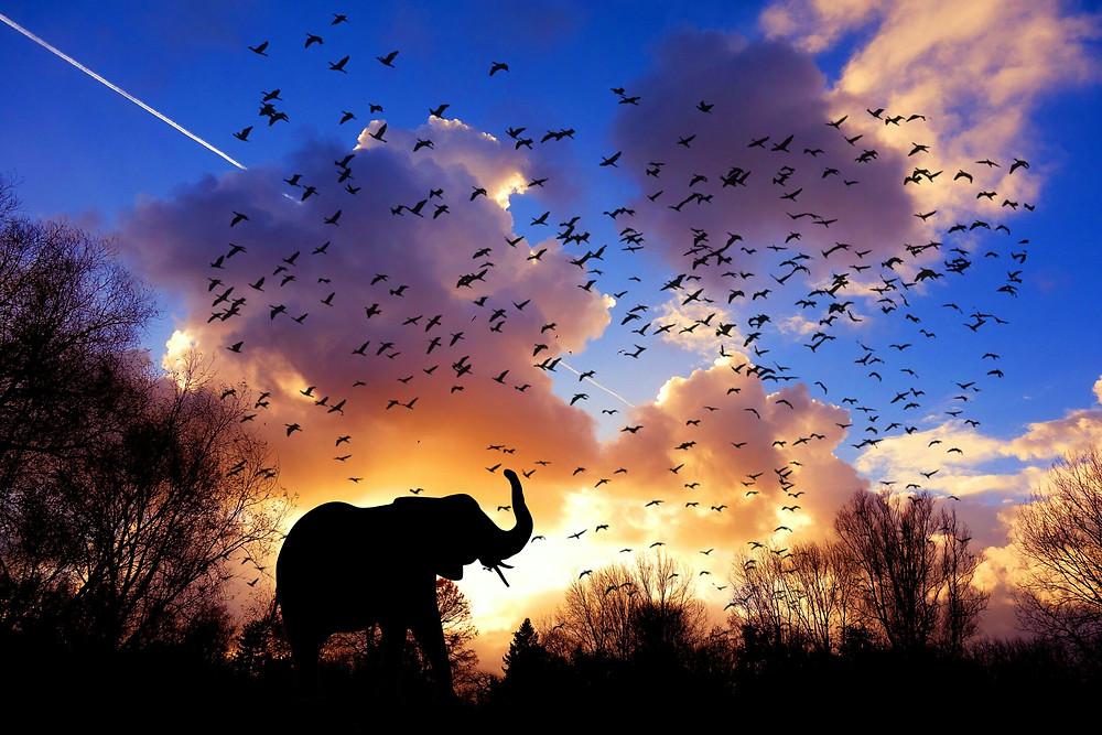 Eco-responsabilité - voyage - responsabilité - économie solidaire - respect - nature - population - éléphant - safari - ciel - oiseaux - beautiful landscape