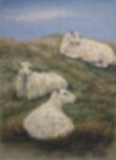 Hear no evil, see no evil, sheep no evil