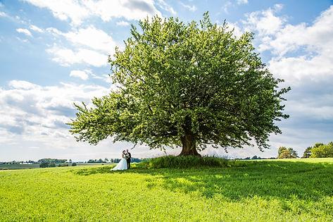 Bryllupsbilde under stort tre. Fotograf Atle Slettingdalen