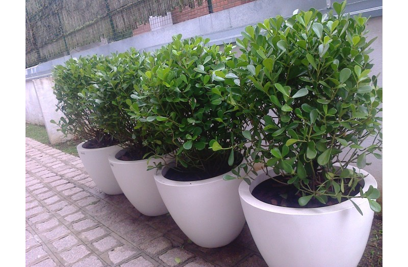 marcia-jardinagem-foto-800x525