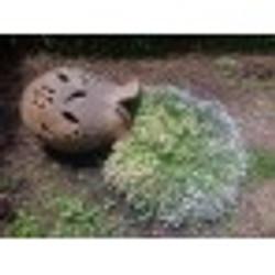 marcia-jardinagem-programa-vida-74x74