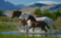 horse-wallpaper-38.jpg