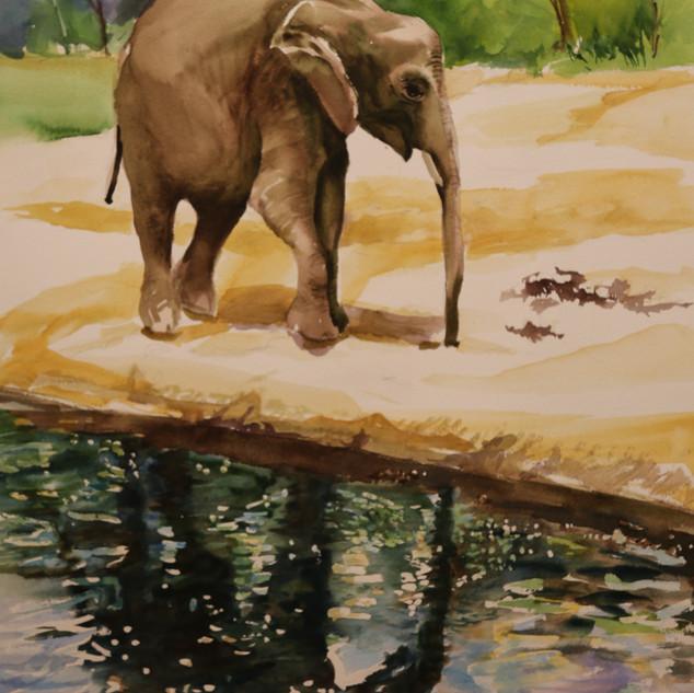 Elephant Reflecting (watercolor)
