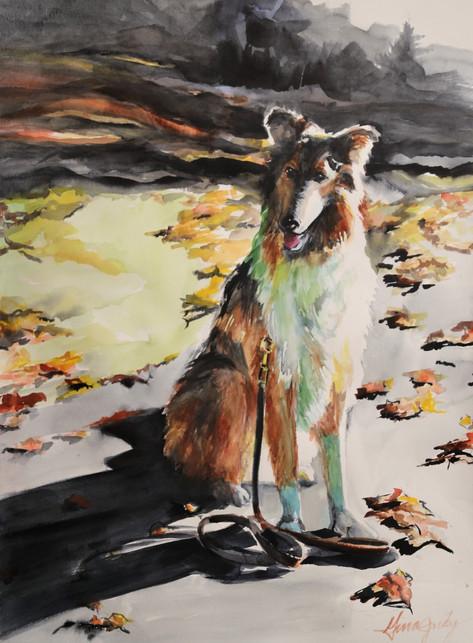 Young Mac In Late Fall