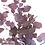Thumbnail: Eucalyptus stabilisé rouge