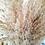 Thumbnail: Pampa Fluffy