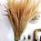 Thumbnail: Calamagrostis séchées