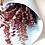 Thumbnail: Eucalyptus baby blue rouge
