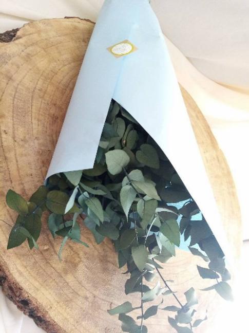 Eucalyptus stabilisé vert