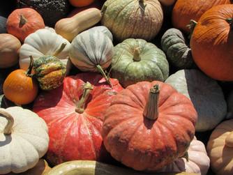 A Taste of Autumn Veggies