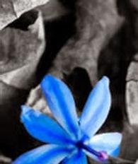 fleur Marceau.jpg
